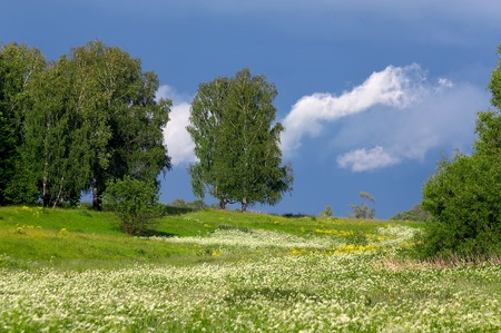 Trees on a meadow with a grass and dandelions on a background of the sky with clouds