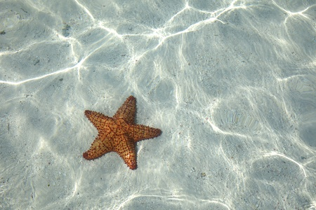 Starfish on the bottom of the Caribbean Sea