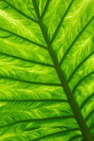 gleam: Green palm leaf with veins on a gleam