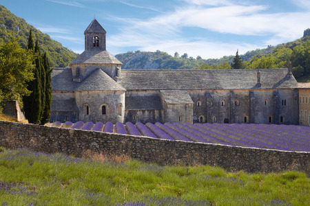 Abbey of Senanque and blooming rows lavender flowers  Provence, France, Europe