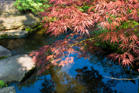 Traditional japanese garden in Kyoto, Japan. Stock Photo - 5121204