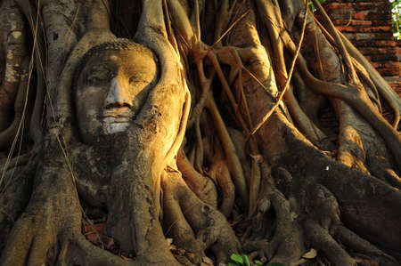 Thai ancient, Buddha image in tree photo