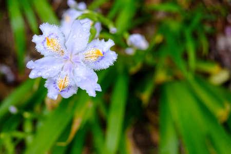 in bloom: Flower bloom
