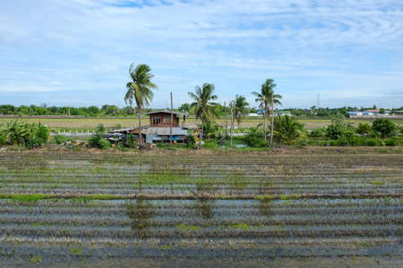 asian house plants: Traditional Thai house in the rice field