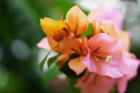 Flower  Paper flower