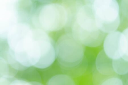 Green natural background of out of focus forest or bokeh
