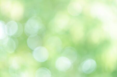 Green Bokeh in the Forest