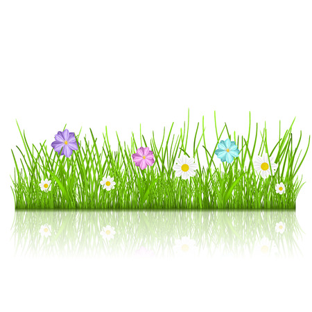 Green grass and multicolored flowers with reflection