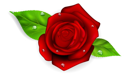dew: Red rose with two green leaves and dew drops Illustration