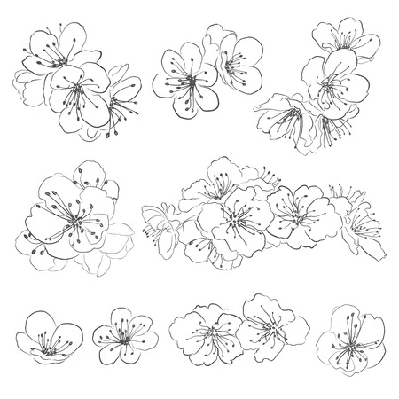 Set Zeichnung Kirschblüten, schwarz auf weiß Vektorgrafik