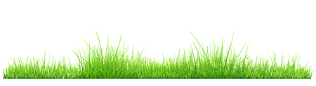 grass isolated: Green grass isolated on white background. Vector illustration