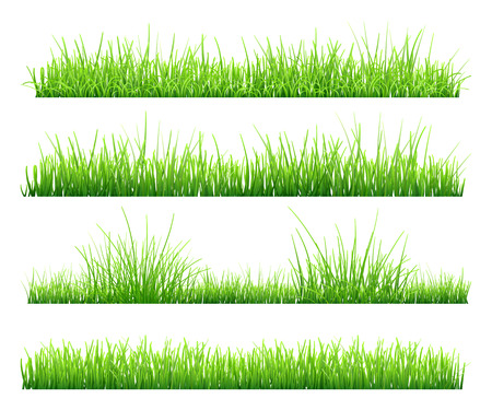 grass isolated: Set of green grass, isolated on white background. Vector illustration