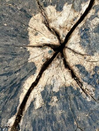 crevice: Crevice on stump