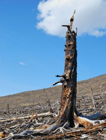 scorched: Stump scorched