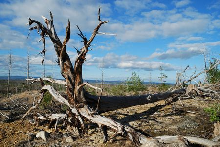Los problemas ambientales  Foto de archivo - 3410274