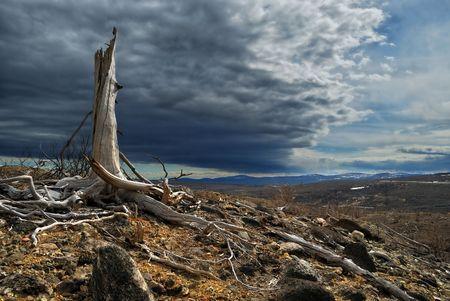 arboles secos: Thundercloud muertos por encima de un bosque