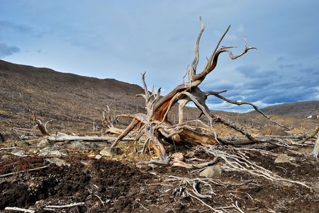 Roots of dead tree on the slope of hill Stock Photo
