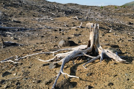 deforestacion: Bosque muerto
