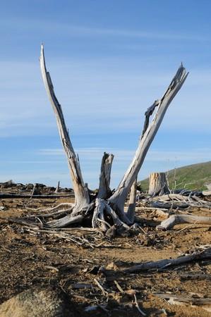 adverso: Consecuencias de las condiciones ecol�gicas adversas.