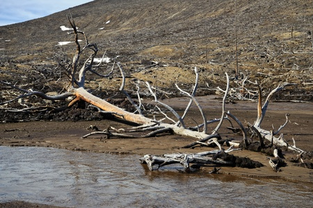 Dead trees near to metallurgical factories  Consequences of adverse ecological conditions  photo