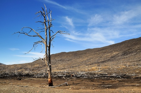 Dead trees near to metallurgical factories  Consequences of adverse ecological conditions  Reklamní fotografie