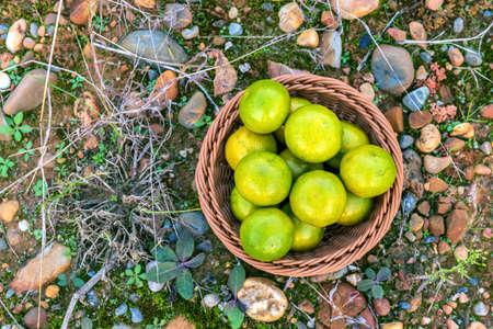 Fresh orange fruits in fruit basket