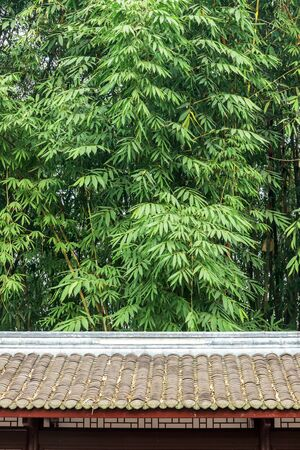 Green bamboo leaves background with tile roof eaves Stok Fotoğraf