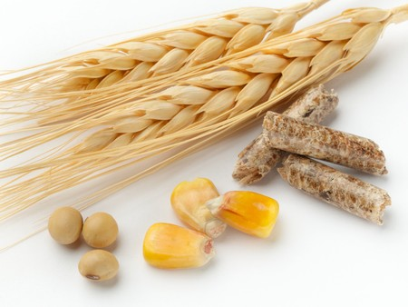 macro shot of corn, wheat, soy beans and wood pellets shot on white background with soft shadow Foto de archivo