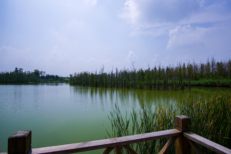 nature scenery: Nature scenery view at a wetland Stock Photo