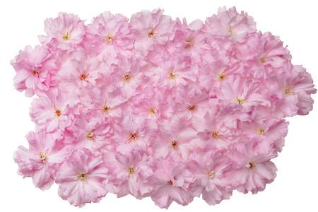 日本の桜の花の分離のヒープ 写真素材