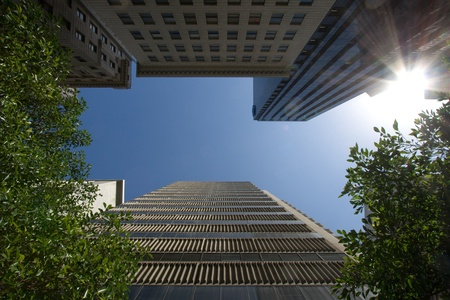 Cityscape of trees between towers photo