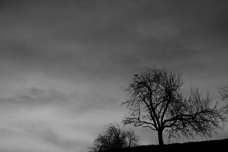 nightfall: Early morning sunrise capturing a solitary tree