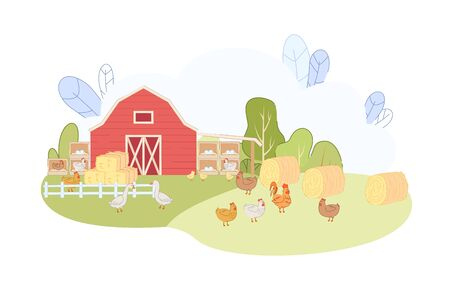 Free Range Chicken Eat Grass in Farmyard Fowl Farm