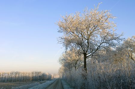 zeeland: Hoarfrost covered trees surrounding the rural orchards on a beautiful winter morning. Stock Photo