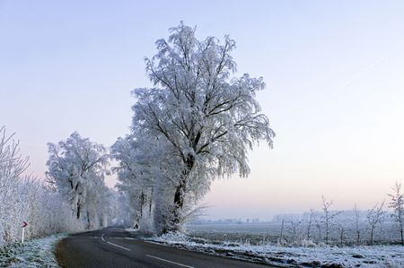 ice dam: The frosted trees and bushes along a country road in Zeeland, the Netherlands, partially lit by the highbeams of a car. Early morning. Stock Photo