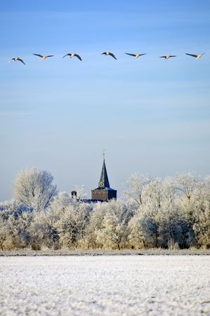 zeeland: A flight of migrating greylag geese over a typical Dutch winter schene in Zeeland, the Netherlands