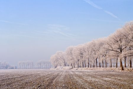 archetypal: An almost archetypal image of Zeeland, the Netherlands: a freshly ploughed field in the polder, surrounded by dykes and trees, covered in frost and a faint haze on a cold winter morning