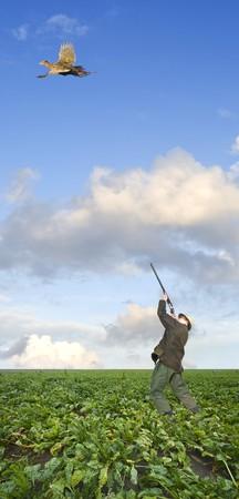 Un chasseur, qui vise au-dessus de sa tête à un faisan, poule, s'envoler dans un champ de betteraves à sucre