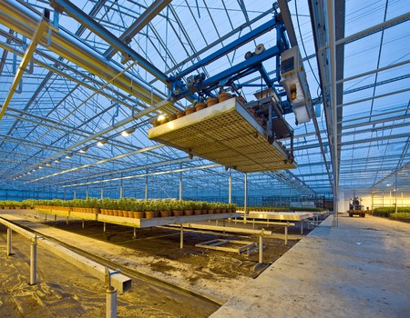conditioned: A robotic pick and place unit in a tungsten lit glasshouse, arranging trays of lilies at dusk Stock Photo