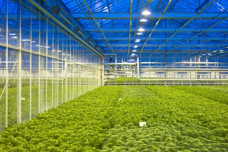 regulating: The tubes and valves, regulating the climate control of a horiticulture glasshouse, with various compartiments of lilies Stock Photo