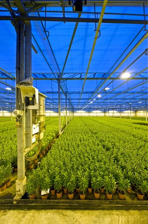 lilies greenhouse stock photos pictures royalty lilies lilies greenhouse a fuse box and telephone post in a huge glasshouse growing endless rows