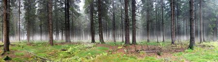 wideangle: Panoramic image of misty forest. Horizontally framed shot.
