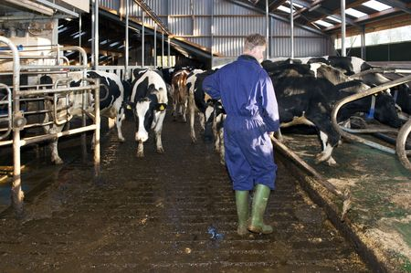 Dairy farmer cleaning a stable near a fully automated milking robot photo