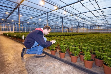 A man,writing on the identification tag of a row of potted plants inside a huge greenhouse Stock Photo - 6484144