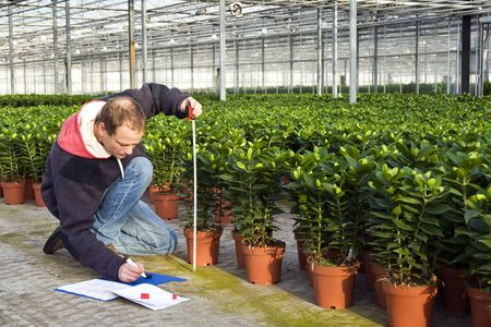 A man measuring the heigth of glasshouse plants whilst takeing notes in a clipboard photo