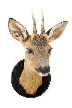 The stuffed head of a young roe deer