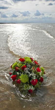 back lighting: Flowers in the gentil surf of the North Sea, shot in back lighting