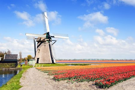 archetypal: Typical, archetypal Dutch scene with a windmill and endless flower beds with tulips, daffodils, hyacinths and a small canal
