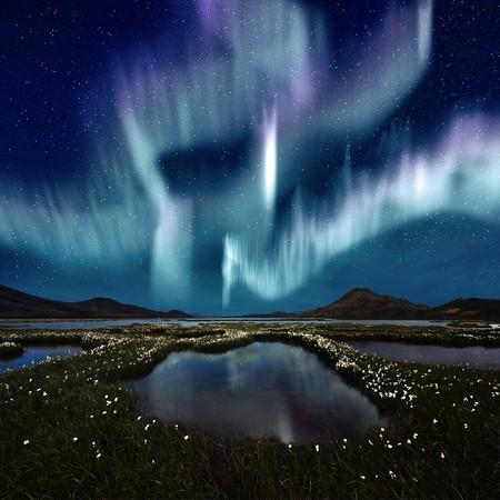 오로라: The Northern Light over the marsh landscape with wildflowers in Landmannarlaugar, Iceland 스톡 사진