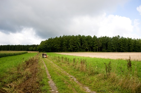 unpaved road: A group of hikers walking on a unpaved road, next to a wheat field, in the Ardennes mountains.